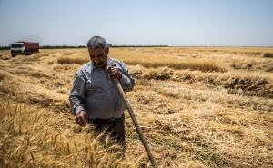 اجحاف دولت روحانی در حق کشاورزان / کشاورزان میتوانند از دولت خسارت بگیرند