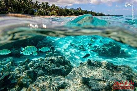 138269 226 - جزایر زیبای «کوک»